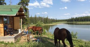 Horses grazing in the sun in front of a guest cabin at TeePee Heart Ranch